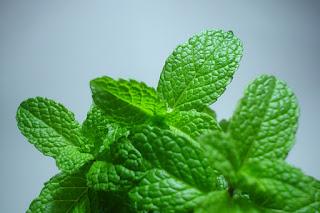 Peppermint ialah materi terkenal untuk permen karet 10 Manfaat Peppermint Bagi Kesehatan