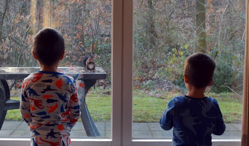 Eekhoorntjes op bezoek in Landal Heideheuvel