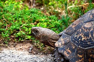 Mencegah Shell Rot Pada Kura-kura