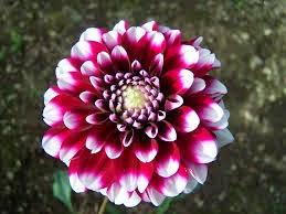 Los Tipos De Flores Del Mundo Entero 5 Tipos De Flores Mas Bonitas