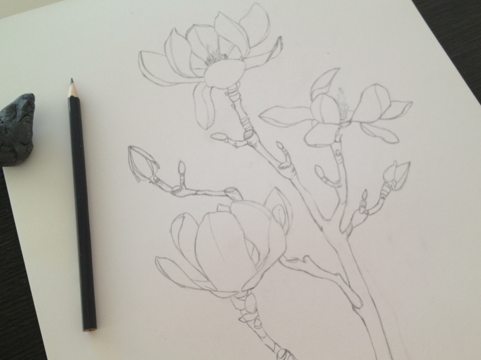 Schilderijen van orchidee n en andere botanische werken magnolia 39 s vragen om een schilderij - Hoe om kleuren te maken ...