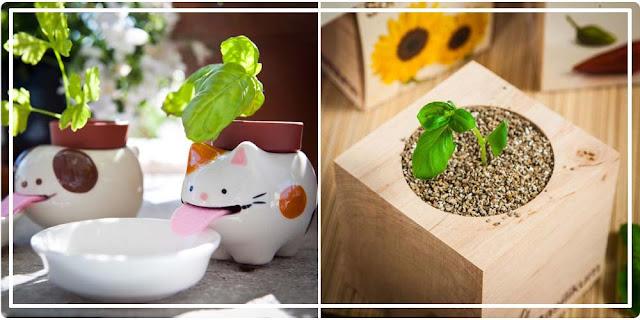 Peropon chat et Ecocube Cadeaux Folies