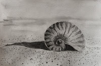 water soluble graphite painting of a seashell