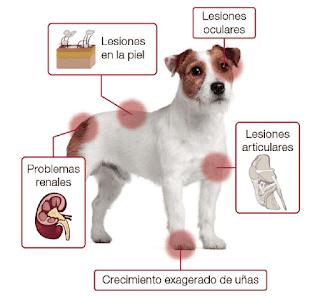 que pueden causar cojera en los perros