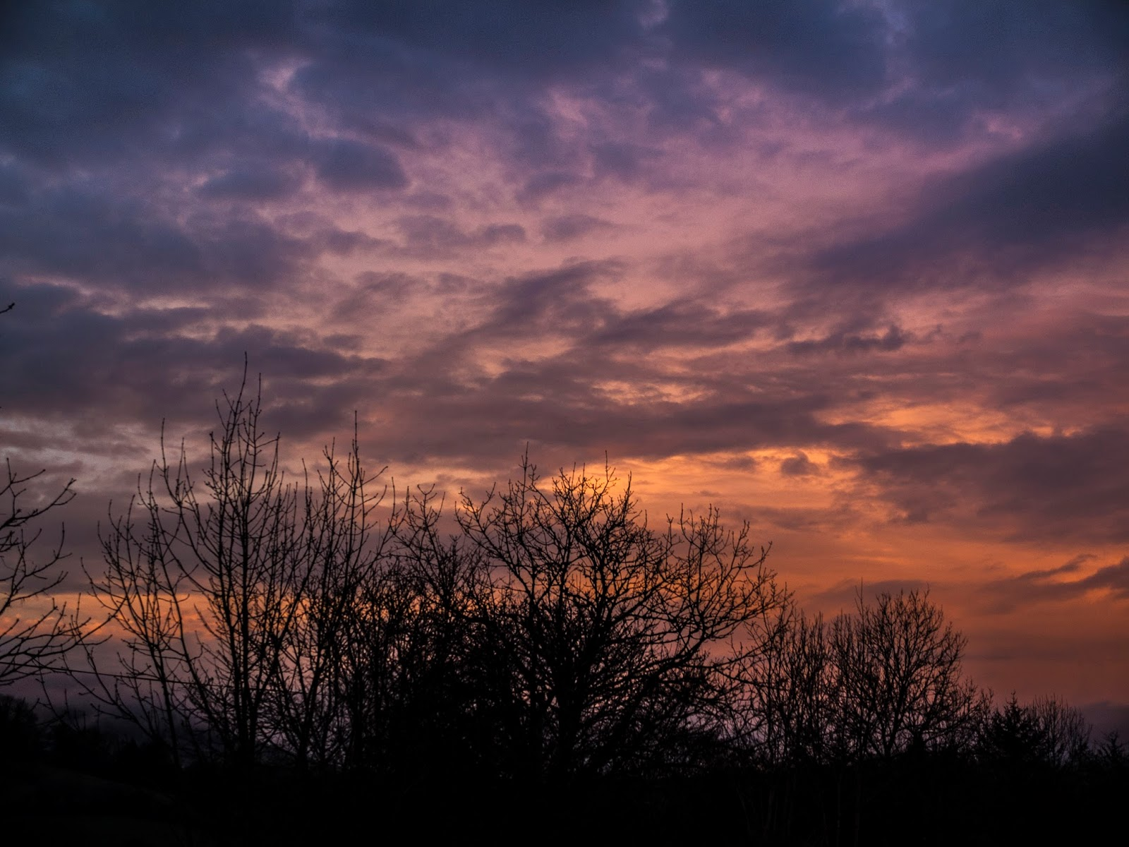 Colourful sunset clouds and silhouettes of tree branches.