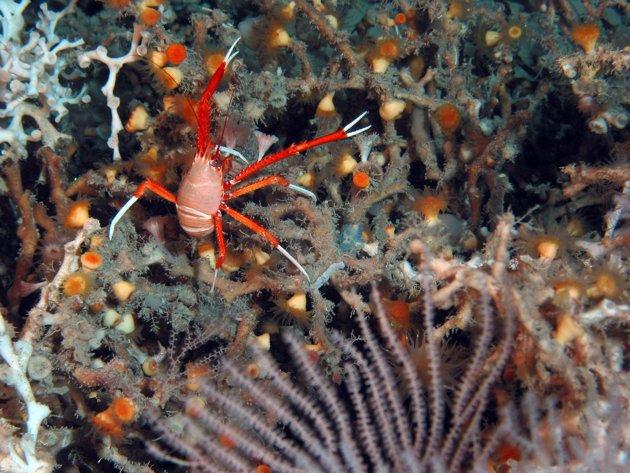 Mengerikan! Nelayan Kongsi Gambar Hidupan Akuatik Mirip