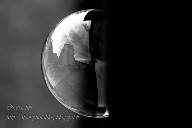 bulle black and white