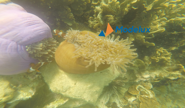 Labun Island Snorkeling dan Diving In Batam