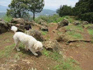 Dog at the Estribo Grande in Patzcuaro