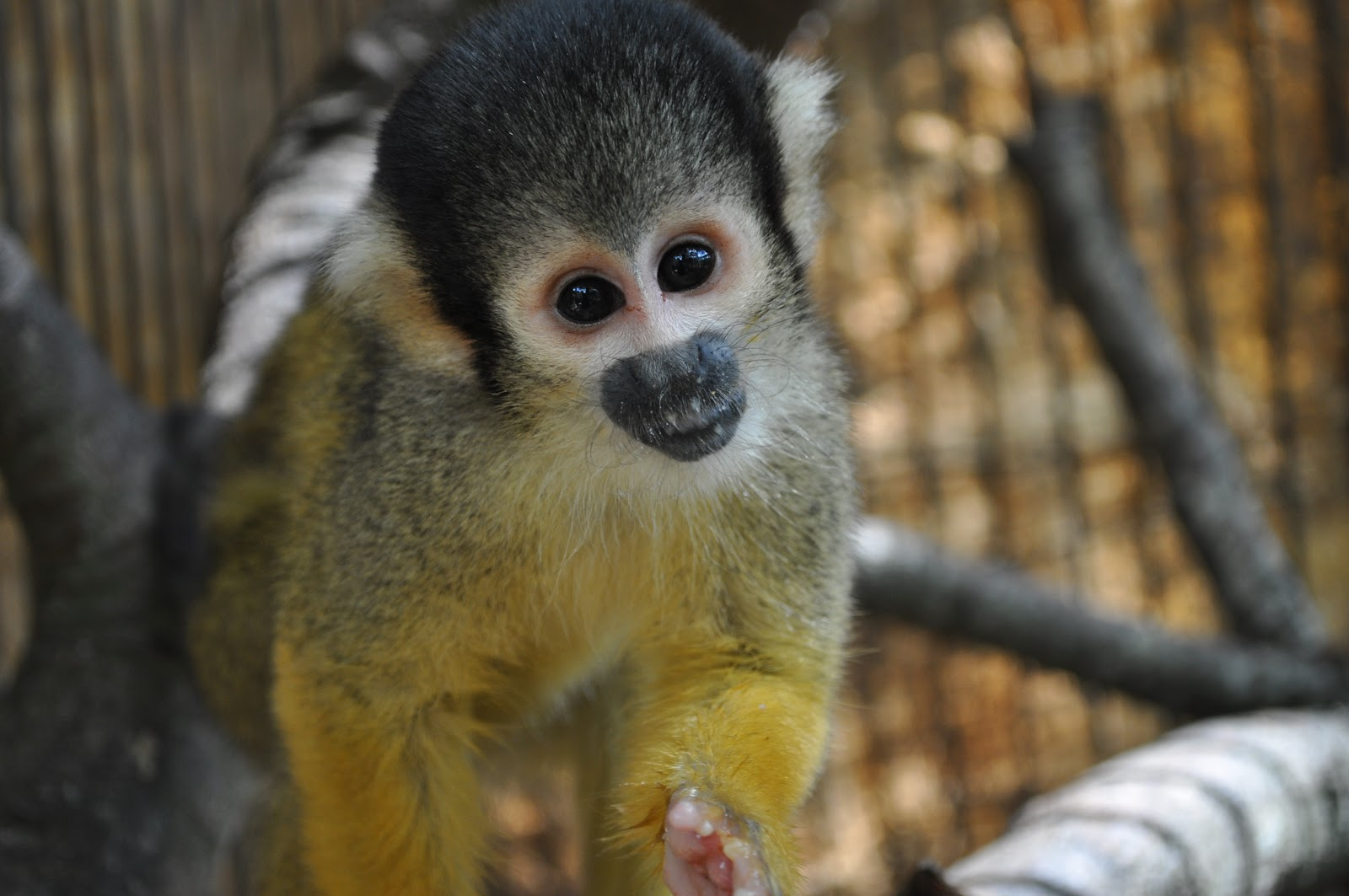 Titi Tales: Our Stories of a Small South American Monkey