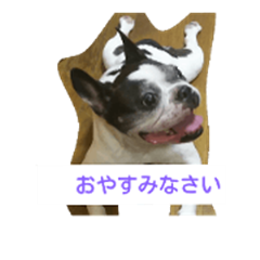 French Bulldog monologue