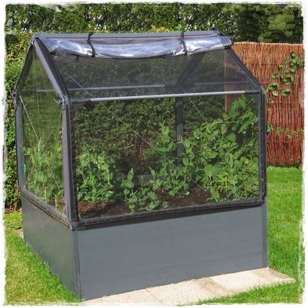 "<img src=""mini greenhouse6.jpg"" alt=""mini green house"">"