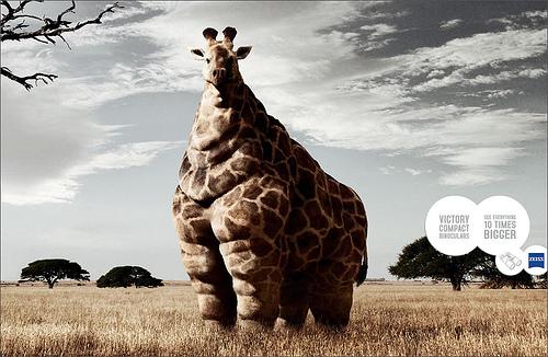 cartel con una iJirafa muy gorda