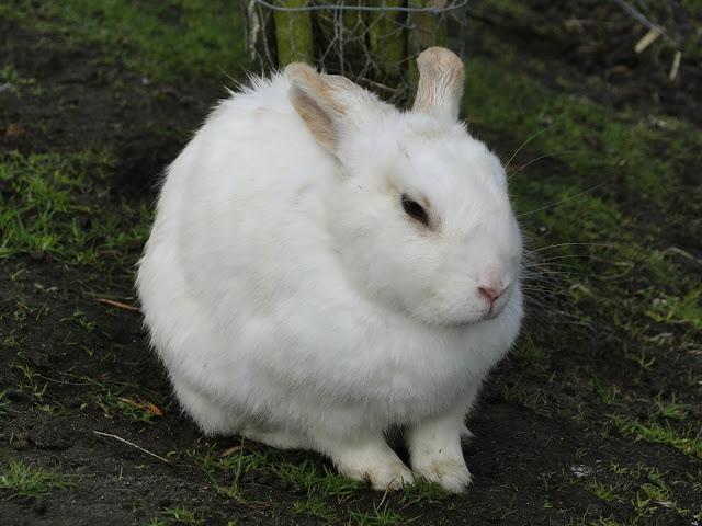 bunny, spring, grass