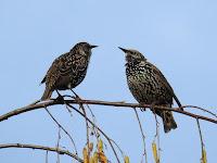 Evolusi Kicau Burung Ini Berubah