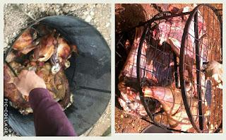 شواء اللحم والطريقة