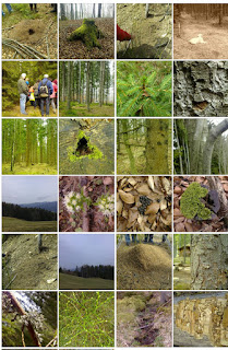 Bilder vom Ameisenheger-Kurs: Ameisennester, Wald, Bäume