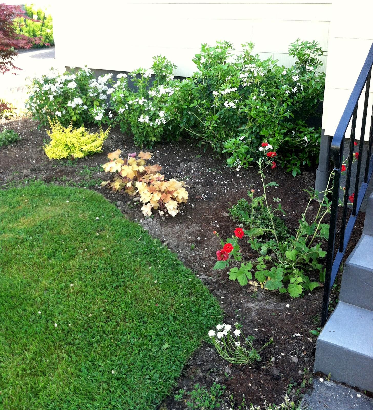 a home in the making renovate front yard landscape updates. Black Bedroom Furniture Sets. Home Design Ideas