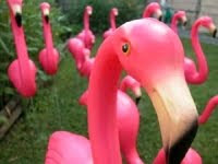 Flamingo Thief - Based on the Susan Trott novel of the same name.