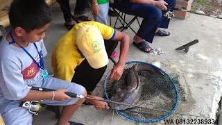 Umpan Pelet Ikan Lele Babon