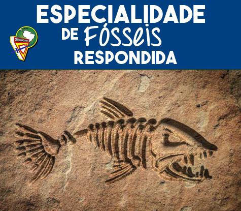imagem da espinha de um peixe pré histórico