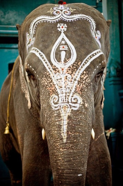 indian elephant painted face