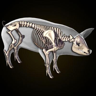 imagens-3d-anatomy-anatomia-veterinaria-veterinary-animal