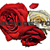 White and Red Roses With Petals