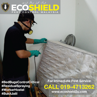 Bed Bugs Control - Pest Control Selangor