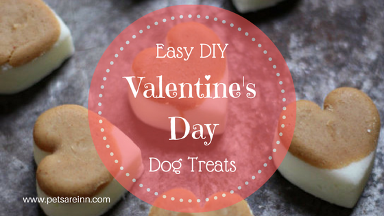 Valentine's Dog Treats