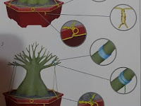 Cara Membuat Bonsai Adenium