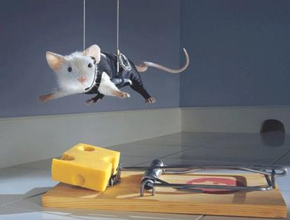 Mouse trying to get cheese