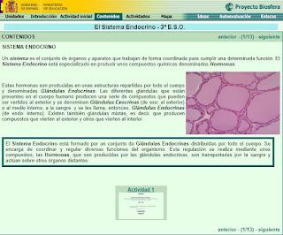 Información y actividades del Sistema Endocrino
