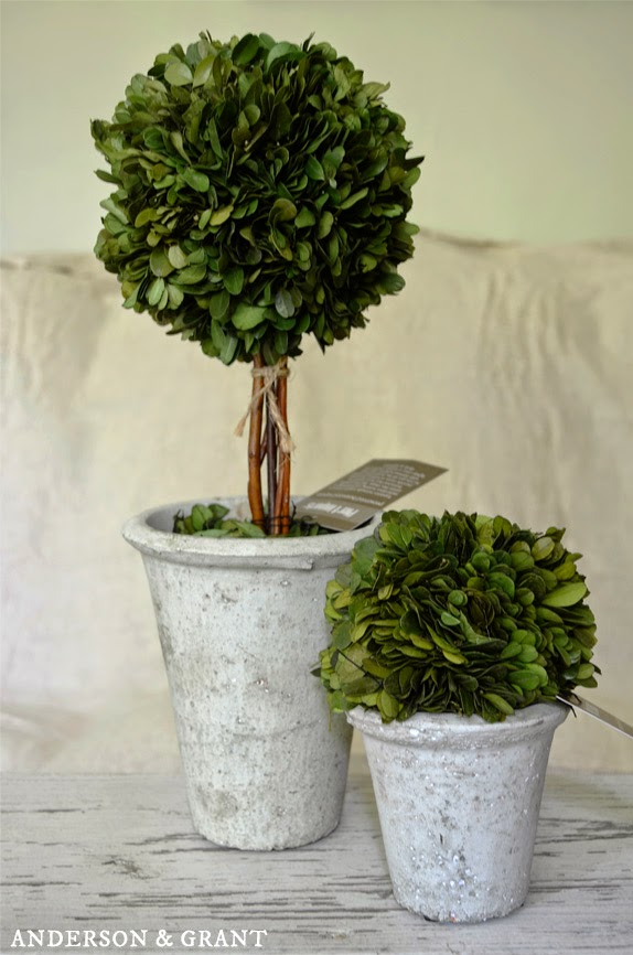 Boxwood Topiaries from Pier One Imports | Anderson & Grant