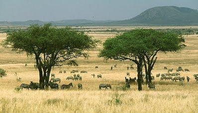 Macam-macam Satuan Makhluk Hidup dalam Ekosistem