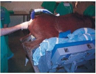 Teknik Operasi Perianal Fistula dan Fistula Rectovaginalis pada Hewan (Bedah Digesti)