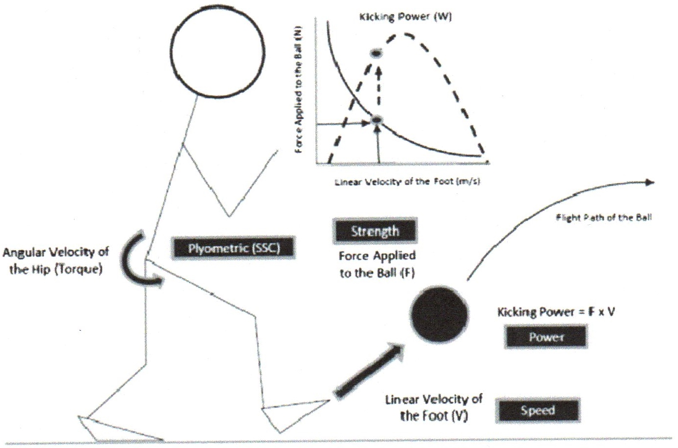 What Are The Fundamental Biomechanical Principles Of