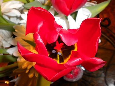 Sherri S Jubilee February 2012