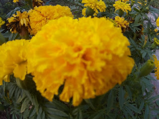 Free download ,Yellow Flower Free Images