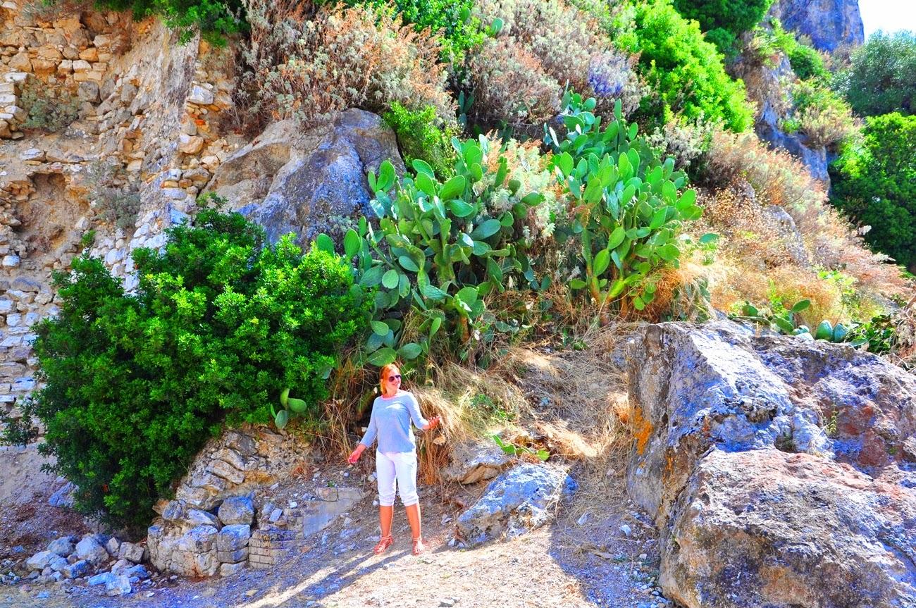 rośliny_Korfu