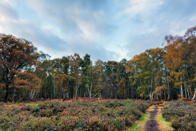 colourful woodland at Holme Fen in the East Anglian Fens in Cambridgeshire