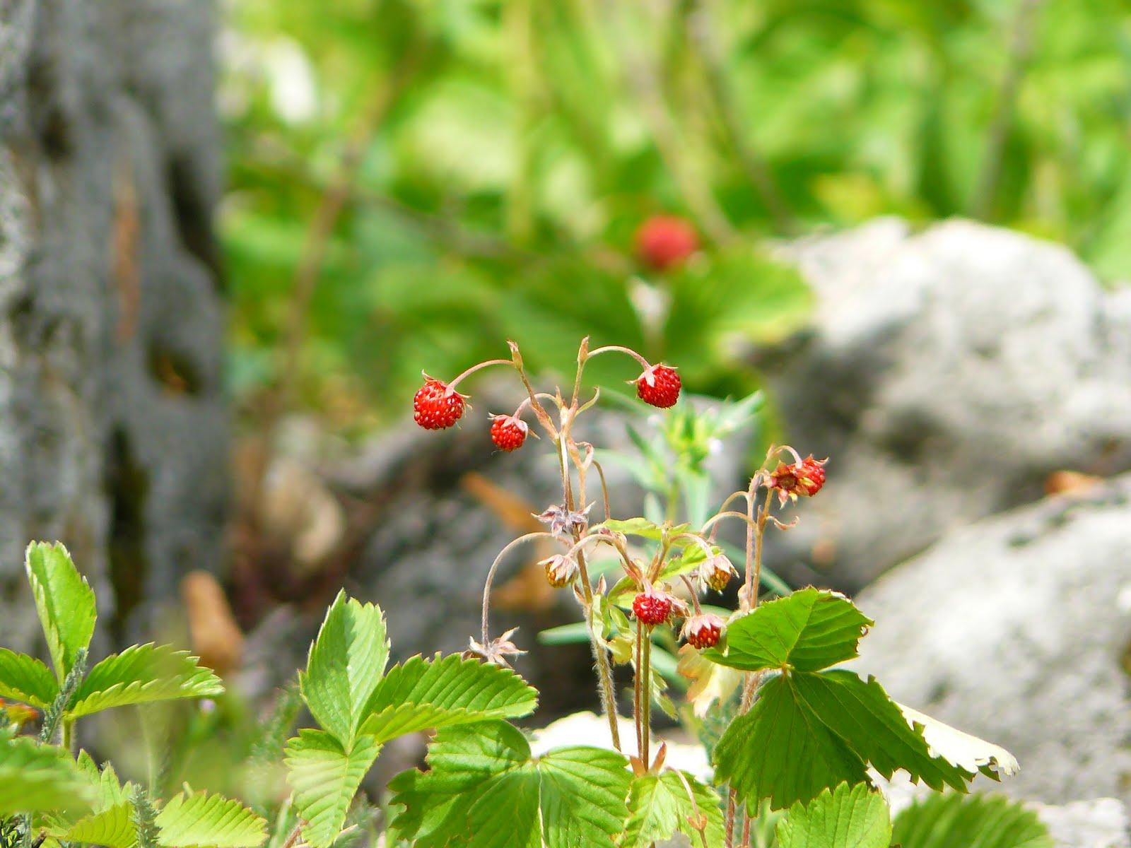 ягоды башкирии фото расскажем вам специфике