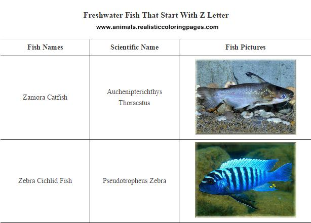 Freshwater Fish That Start With Z Letter