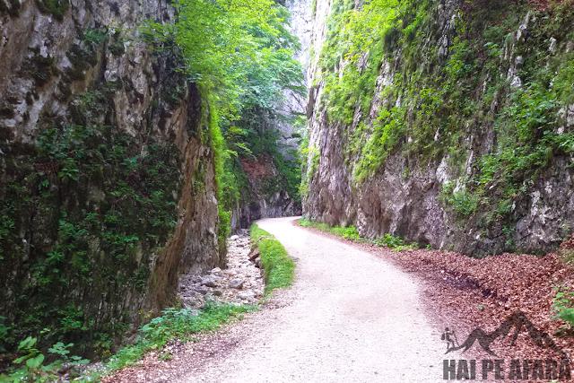 Drumul Parapastiile Zarnestilor