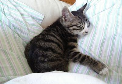 Alasan Kucing Suka Manja Dengan Tuanny, Jelas Sains