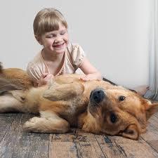 Cualquier perro puede ser seguro