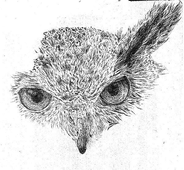 Eagle Owl #9   Fuzzydragons