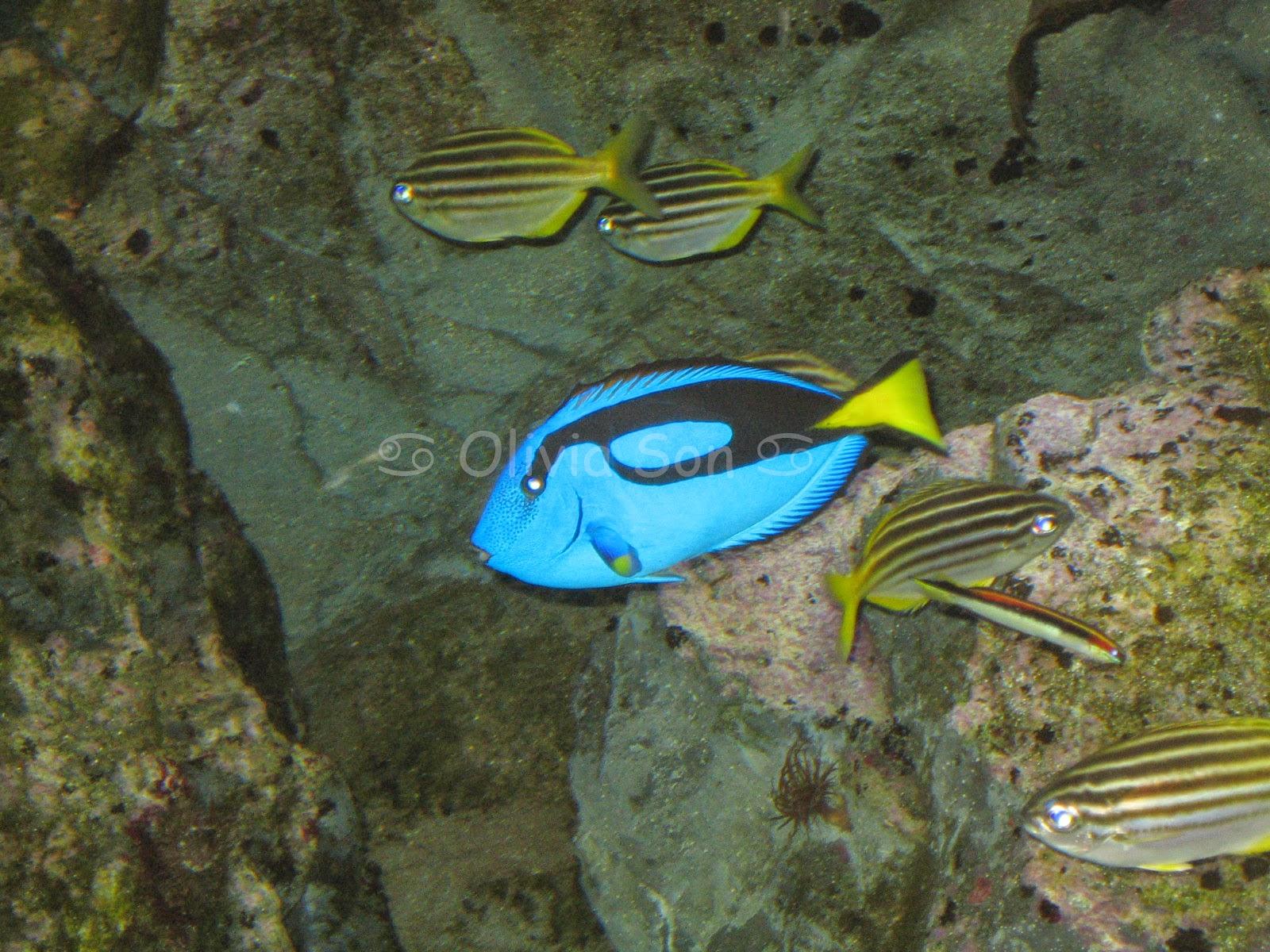 Dori, Sydney Aquarium, Sydney, Australie