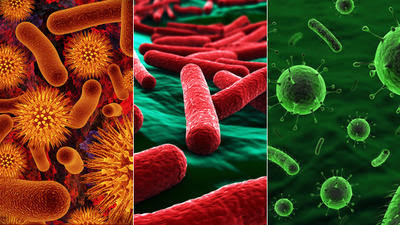 The bacteria constitute a domain of single Bacteria Definition : What Is Bacteria ?