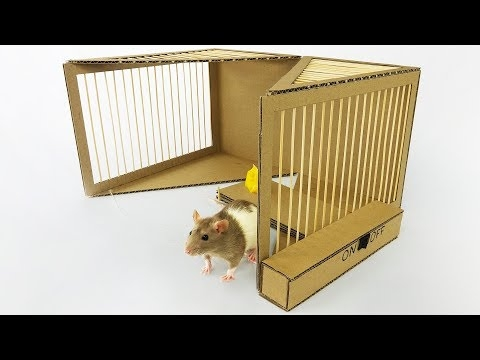 How To Create A DIY Simple Rat Trap From Cardboard